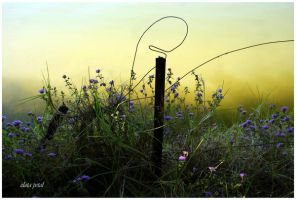 flowers around wires by Zlata-Petal