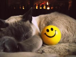 Happiness is a Warm Cat by sophatizer