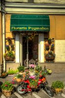Flower shop by stracini