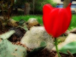 The Orton Effect Series: Tulip by carbyville