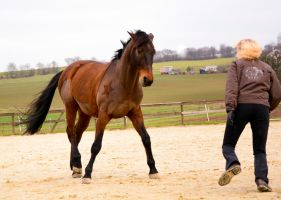 Free Dressage- Let's play by LuDa-Stock