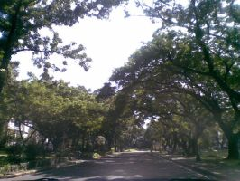 Along the UP Campus by snooperj