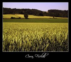 Corn Fields 01 - France by iFab
