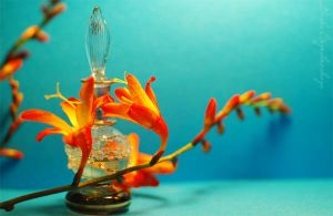 The perfume and crocosmia.... by TheRedGirl