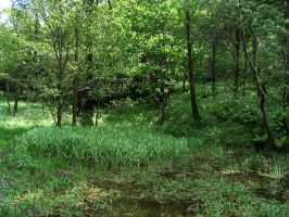 pond 03 by Pagan-Stock