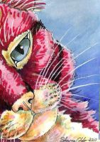 Red Cat ACEO by SpottedPegasus