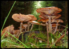 toadstool by rope-Focus-admission