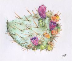 Cactus Fruit by WentToTheMoonToday