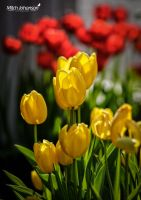 Yellow and a Blur of Red by mjohanson