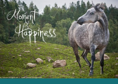 Moment Of Happiness by Horses-Make-My-Heart
