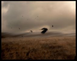 the ravens flyaway by SHUME-1