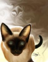 Siamese and Coffee by wulfiesacolyte