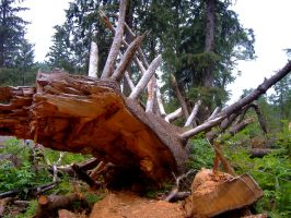 Fallen Tree by Sidneys1
