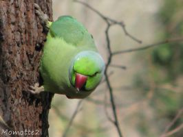 Parrot of the spring by Momotte2