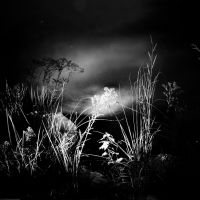 The Night Garden by intao