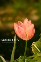 Spring fairy by Sharon-stock