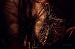 Cobweb In Shadows by JoniNiemela