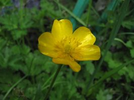 Buttercup by The-Brade