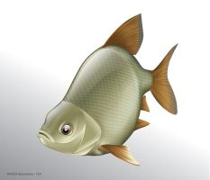 Roach fish Vector Illustration by ganzart