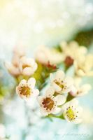 Spring Blossoms by DesignBySterling