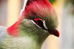 Turaco n2 by deliquescing