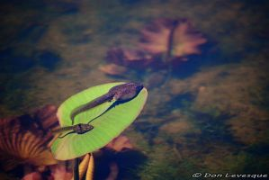 Tadpoles resting by imonline