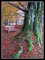 beech bench by pinkzigzag