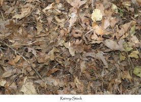 forest floor tex 2 by Rainny-Stock