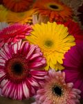 Colorful spring by ruthsantcortis