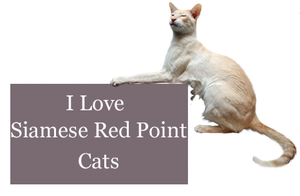 I Love Siamese Red Point Cats by Loulou13
