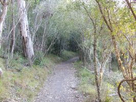 Hiking Trail 001 - Stock by EasternBrumbyStock