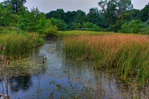 The Swamp by mariustipa