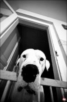 A Dog by mkexperiment