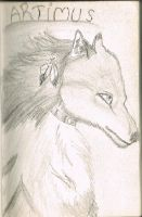 Female wolf by Voltorn1