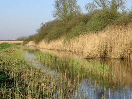 old and new reed by schaduwvacht