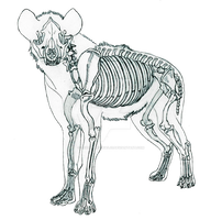 Hyena Skeletal Anatomy by GuardianAngel07