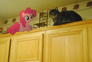 Pinkie the Cat by UtterlyLudicrous
