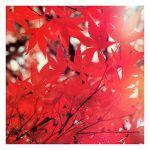 Red Fall by theonlysong