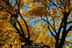 AutumnLeaves 0003 10-26-14 by eyepilot13
