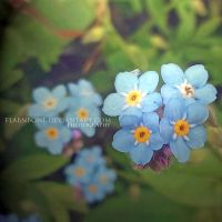 Forget me Not by FlabnBone