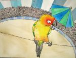 Circus parrot by greencheek