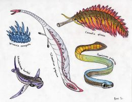 A Collection of Squishy Marine Beings by Pterosaur-Freak