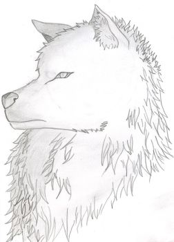 Wolf Bust by max506210