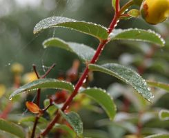 the iceing on the cake -the raindrops on the plant by lifeforceinsoul
