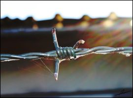 barbed wire by ronald87