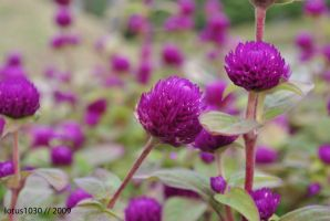Purple Blooms for Spirit Day by lotus1030