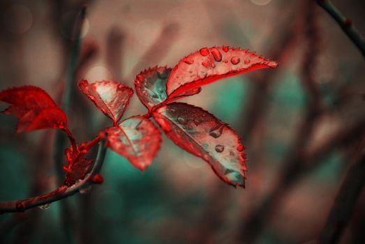 .:.Painted Leaves.:. by Ailedda