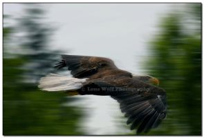 Sonic Eagle by LoneWolfPhotography