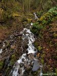 Downstream by Swanee3