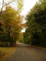 Autumn. England. Suburbia. Soon Be Home Time. by SrTw